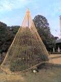 天王寺の、可愛らしい「冬囲い」です。