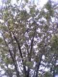 08-04-16_09-51.jpg
